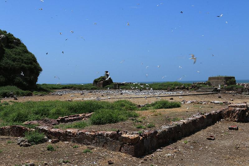 Vestige du four à pain et des fondations construit pendant l'exploitation minière (Crédits : RNNC)
