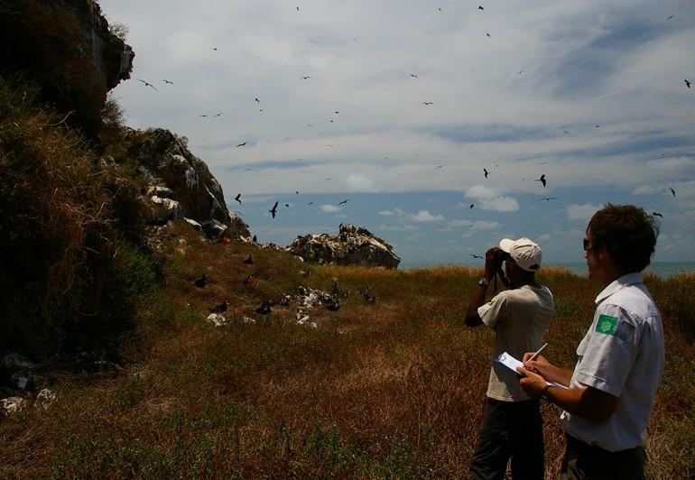 Suivi des nids de Noddis bruns (Crédits : RNNC)