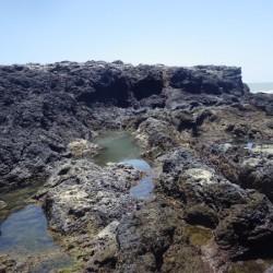 Vasques découvertes à marée basse sur le Petit-Connétable (Crédits : RNNC)