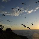Couché de soleil à la Réserve de l'Ile du Grand-Connétable (Crédits : R. Le Guen)