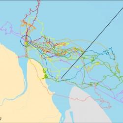 Trajets GPS de Frégates superbes (Crédits : RNNC)